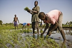 Sin agricultura no hay soberanía alimentaria. Sin soberanía alimentaria no hay desarrollo   Haití, los otros terremotos   salud equilibrio   Scoop.it