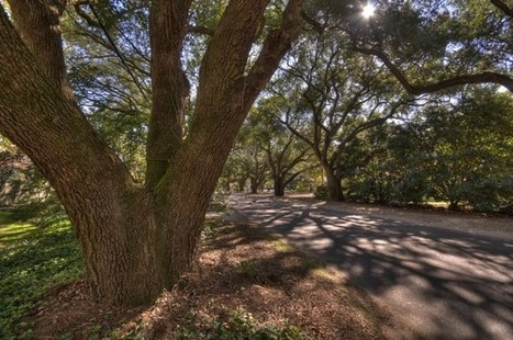 Why More Cities Need To Add Up The Economic Value Of Trees | Urbanisme | Scoop.it