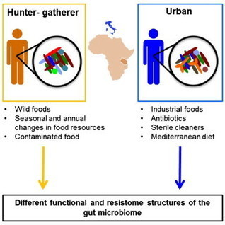 Metagenome Sequencing of the Hadza Hunter-Gatherer Gut Microbiota | Systems biology and bioinformatics | Scoop.it