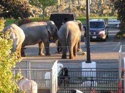 Friends of Animals   Circus   Animals in captivity - Zoo, circus, marine park, etc..   Scoop.it