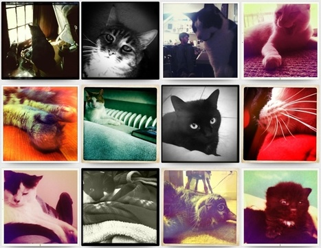 Hipstamaticat, Photos of Cats Taken Using Hipstamatic | meme, lol & existensialism | Scoop.it