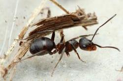 ¿Por qué las hormigas no sufren atascos? | Bichos en Clase | Scoop.it