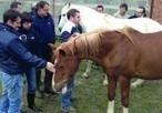 Le cheval qui murmure à l'oreille des managers… | QVT, management et épanouissement professionnel dans le Loiret | Scoop.it