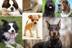 Dog Breeds: What Does Your Choice of Breed Say About You? - The Epoch Times | Dog Lovers | Scoop.it