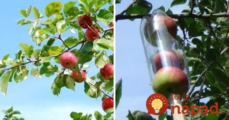 Zber úrody bude hračka: Vyrobte si šikovný zberač ovocia z palastovej fľaše! | Domácnosť a bývanie | Scoop.it
