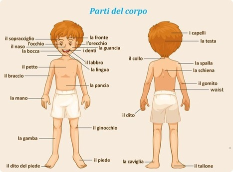 Learning Italian - تعلم الايطاليه | Italian Word of the Day | Scoop.it