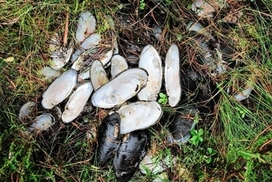 Police on trail of 'pearl poachers' targeting Highland river | Wildlife and Environmental Conservation | Scoop.it