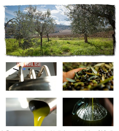 Olio Vitali: quality extra virgin olive oil in Le Marche | Le Marche and Food | Scoop.it