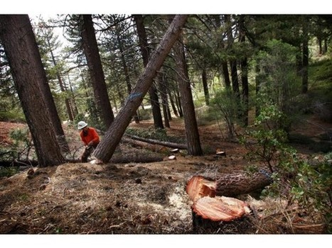 WILDFIRES: Drought fans fears of catastrophic fire - Press-Enterprise   GarryRogers Biosphere News   Scoop.it