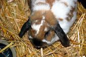 Bunny's Blog: Rabbits Make Green Companions | Pet News | Scoop.it