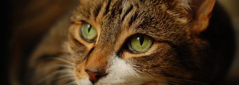 Nueva gama de alimentación natural para gatos | Universo Mascota | Scoop.it