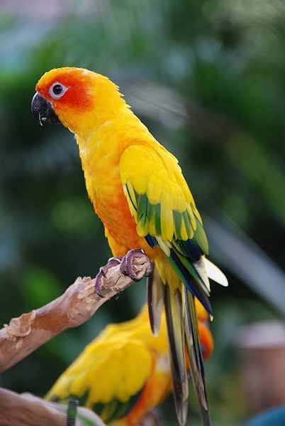 Benefits of Buying Pet Birds for Sale Online | Pets - Buy Pets Online | Scoop.it
