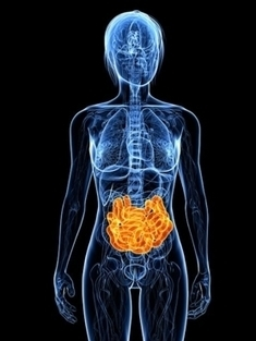 The Tantalizing Links Between Gut Microbes and the Brain | Brain and Learning Factoids | Scoop.it