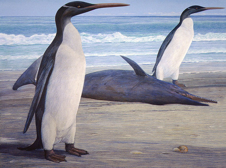 Giant Prehistoric Penguins Stood Nearly 5 Feet Tall   Science Matters   Scoop.it