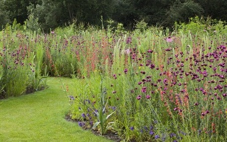 How to sow your own exotic meadow | Share Some Love Today | Scoop.it
