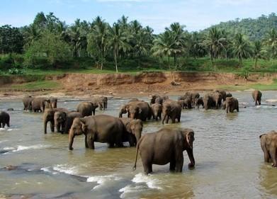 "Top 10 Sri Lanka | Blog Voyage de Joe ""le Moskito"" | Scoop.it"