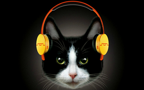 Headphones for Cats? They Cost $999 | All Technology Buzz | Scoop.it
