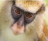 Monkey See, Monkey Speak - Scientific American | English and Language | Scoop.it