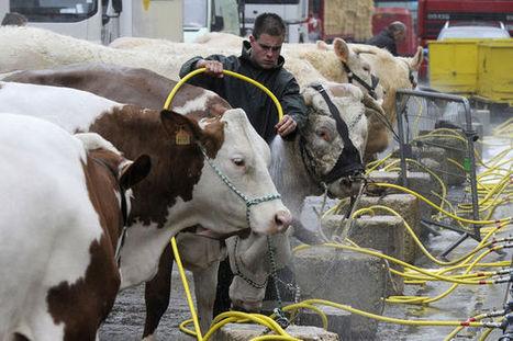 Les animaux d'élevage français gavés de soja OGM importé | CAP21 | Scoop.it