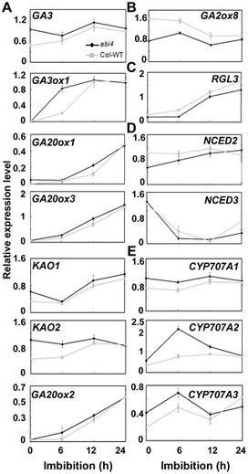 ABI4 Regulates Primary Seed Dormancy by Regulating the Biogenesis of Abscisic Acid and Gibberellins in Arabidopsis | seeds | Scoop.it