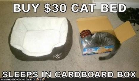 This cat prefers lying in a box instead of his bed! xD | Funny and crazy cats | Scoop.it