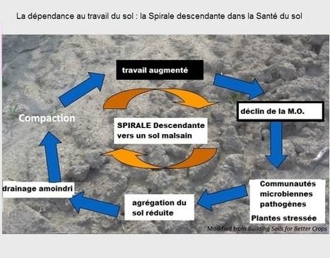 Evaluation du sol par la Cornell University, une approche de diagnostic pour évaluer les sols en santé ! | MOF Matière Organique Fugace réactive du sol | Scoop.it
