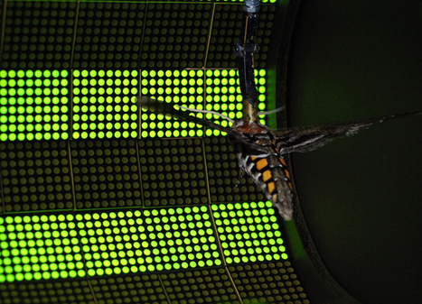 Roboticists Discover the Secret of Insect Flight, and it's Not Wings | Social Foraging | Scoop.it