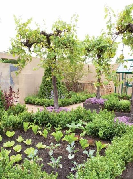 Grow Food Everywhere: Ground Covers, Fruit-Bearing Trees and More | Gardening | Scoop.it