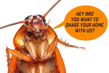 Blog | Pest control West Palm Beach Florida | Scoop.it