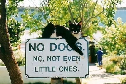 no-dogs-not-even-the-little-ones.jpg (500x333 pixels) | Histoire de chats | Scoop.it