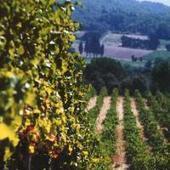 Côtes du Rhône, des vins de qualité | Vins de la Vallée du Rhône méridionnaux | Scoop.it
