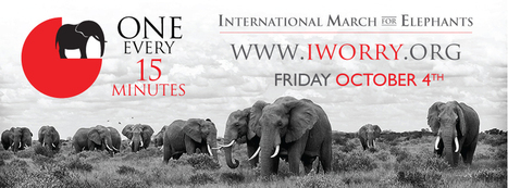 iWorry | Say NO to ivory | Animal rights | Scoop.it