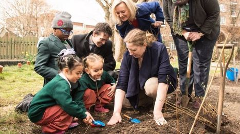 Mini-forests planned for urban schools - BBC News   Glendale Sciences and Technology School   Scoop.it