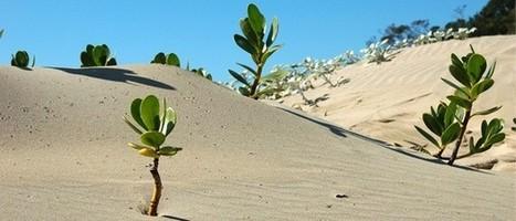 L'homme qui fertilise les déserts | Les déserts dans le monde | Scoop.it