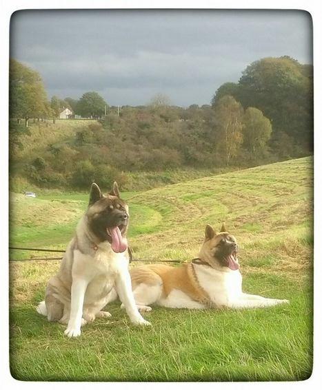 Mr Bailey & Tara in the Park | Digital Media Technology ePortfolios | Scoop.it