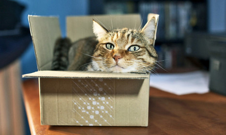 Physicists have 'squeezed' Schrödinger's cat - Futurity | Knowmads, Infocology of the future | Scoop.it