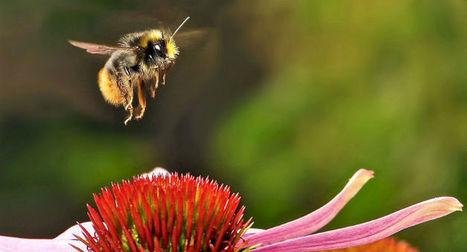 Anche gli insetti possono essere ottimisti | Notizie Ottimiste | Scoop.it