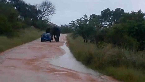 Lucky escape for British woman after elephant flips her car on safari | practice | Scoop.it