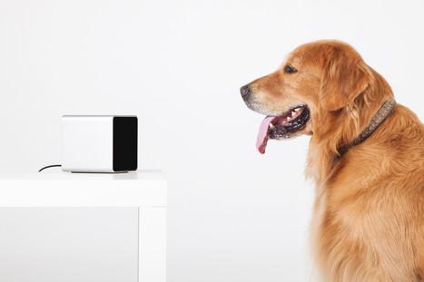 BeagleBoard.org - 2014-01-21-project-spotlight-petcube   Embedded Software   Scoop.it