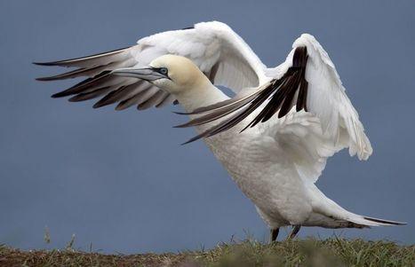 Le tiers des oiseaux  sont menacés d'extinction | Chronique d'un pays où il ne se passe rien... ou presque ! | Scoop.it