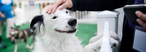 Social Media Conference for Pet Industry | | Atlanta Dog Spa | Scoop.it