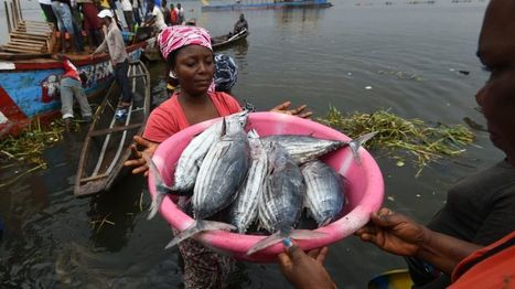 UN: Global fish consumption per capita hits record high - BBC News | Knowmads, Infocology of the future | Scoop.it