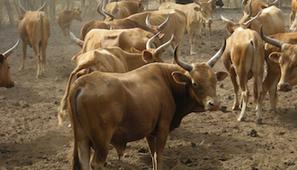 Dossier agriculture : la révolution sera bien élevée | Questions de développement ... | Scoop.it
