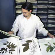 NYBG.org: Steere Herbarium | Herbaria | Scoop.it