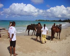Paradise Resorts Jamaica | Cottages Overview - PARADISE VILLA SUR MER | Scoop.it