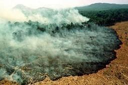 Brasil: Deforestación en Amazonía causa pérdida de fauna y flora microbiana | Canal Azul 24 | Agua | Scoop.it