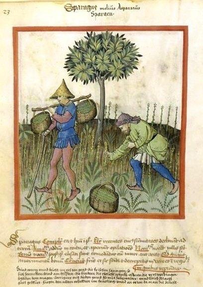Manières diverses de nos aïeux d'apprêter des légumes ancestraux | Histoire et Archéologie | Scoop.it