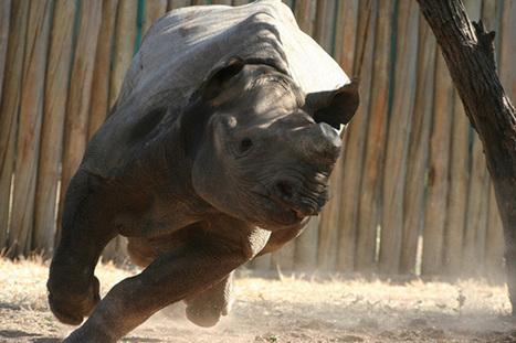 SA wildlife film nominated for prestigious award   Kruger & African Wildlife   Scoop.it