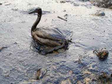 Efectos de la contaminación de los océanos sobre la vida marina | CONTAMINACIONPEDIA | Agua es vida | Scoop.it