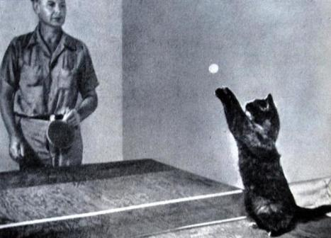 9 Famous Weird Cats of Yesteryear | Strange days indeed... | Scoop.it